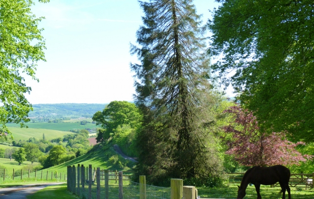 A view down the drive to Fursdon, Devon